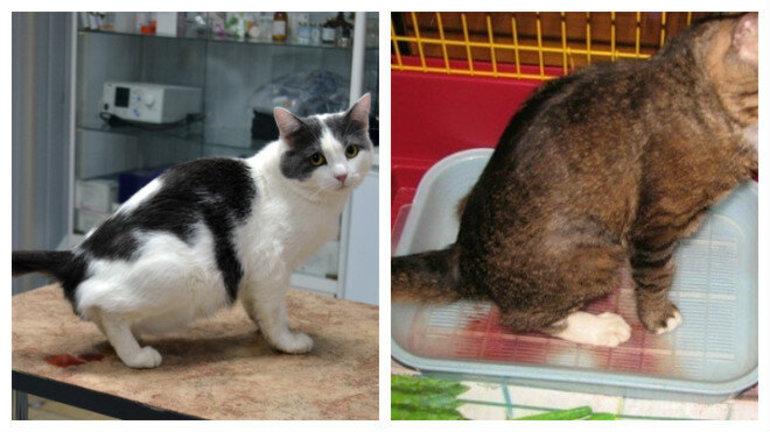 Цистита болезни кошек мочекаменной лечение хгч анализ крови кровь на