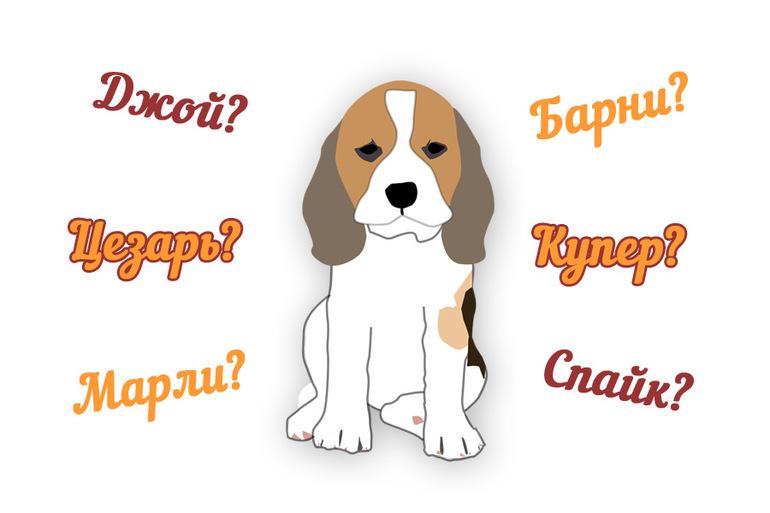 игры имена собак с картинками ризе