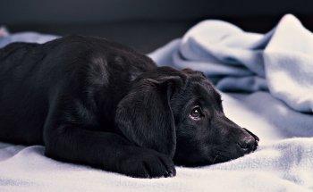 Успокоительные средства для собак: виды, инструкции по применению и отзывы