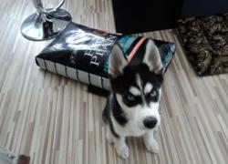Фото 6. Собака и продукция Purina