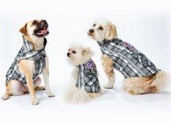 Три собаки в комбинезонах