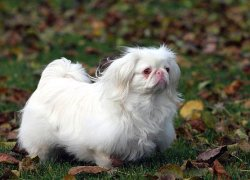 Вариант окраса альбинос