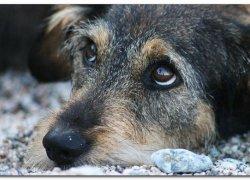 Вид нездоровой собаки