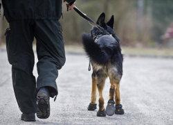 На прогулке в ботинках