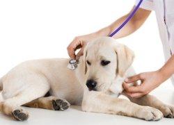 Животное осматривает ветеринар