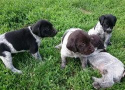 Маленькие щенки в траве