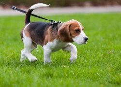 Выгул собаки летом