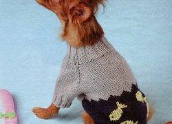 Собака в свитере с рыбками