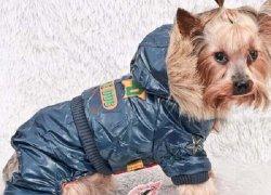 8bed86d183d536b_250x180 Выкройки одежды для собак: пошив одежды и схемы