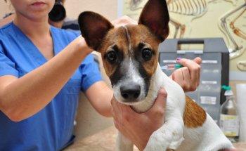 Комплексная вакцина Нобивак для собак: инструкция по применению и отзывы