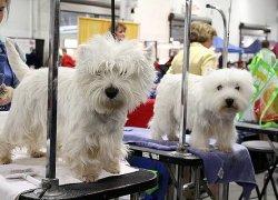 Животные в парикмахерской