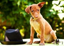 Милый щенок на улице