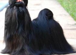 Собака черного окраса