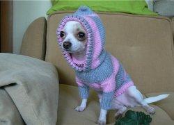 Собачка в комбинезоне с капюшоном