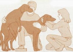 Правильная случка крупных собак