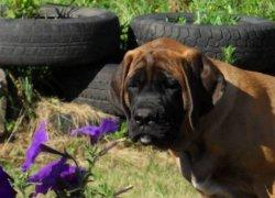 Собака около цветов