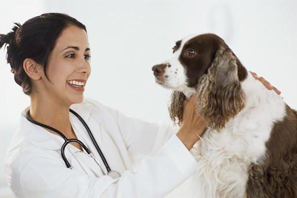 Обзор препарата для собак экзекан: инструкция, состав и отзывы владельцев