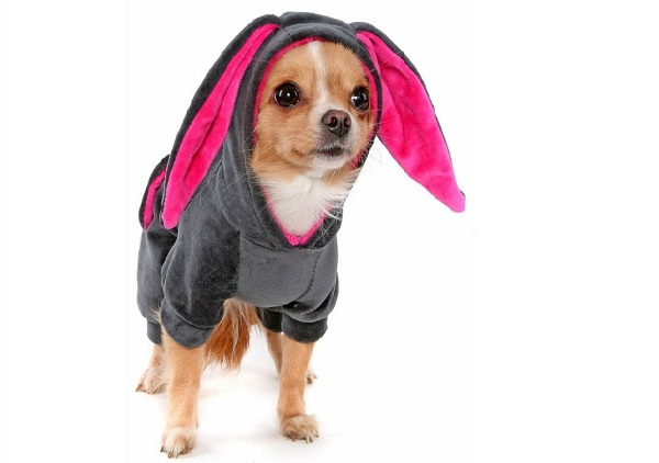 Чихуахуа в костюме кролика
