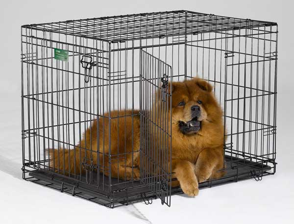 Питомец в клетке для собаки