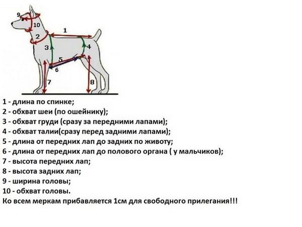 Свитер для собаки связать схема фото 535