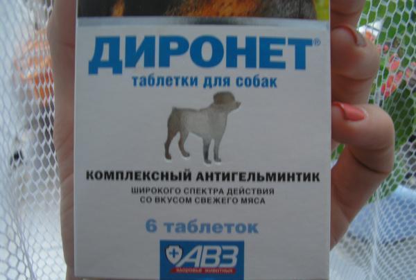 Обзор антигельминтных препаратов для собак (Азинокс Плюс и др