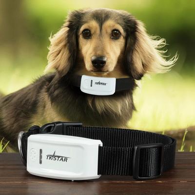 Ошейники для собак с GPS и против блох и клещей: общая информация и советы по выбору