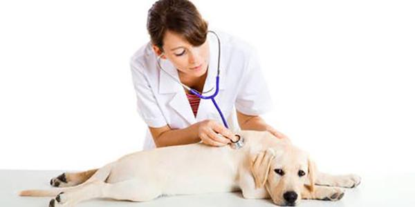 Лекарственный препарат для собак Ронколейкин: инструкция по применению и отзывы