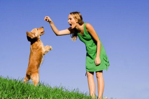 Девушка воспитывает собаку
