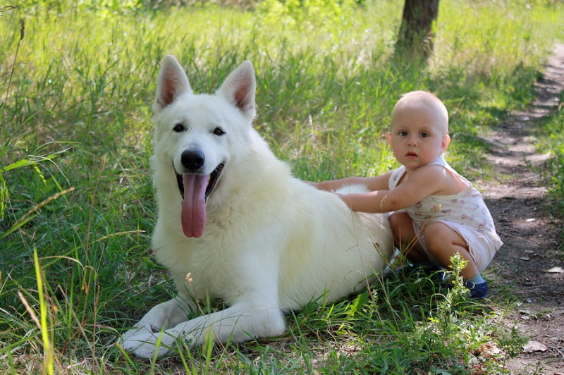 Ребенок рядом с псом