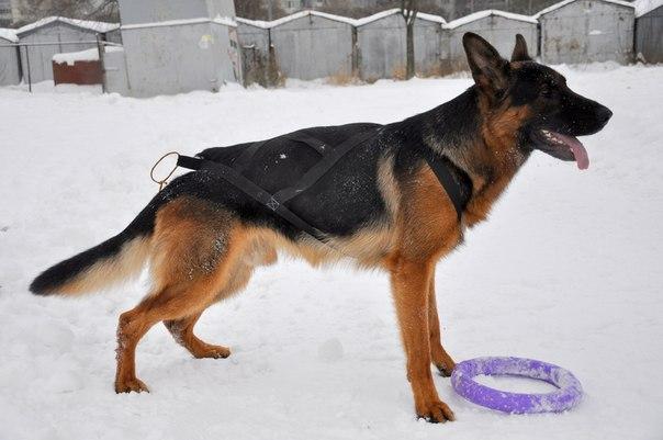 Шлейка для собак: понятие, виды, особенности надевания и изготовления своими руками
