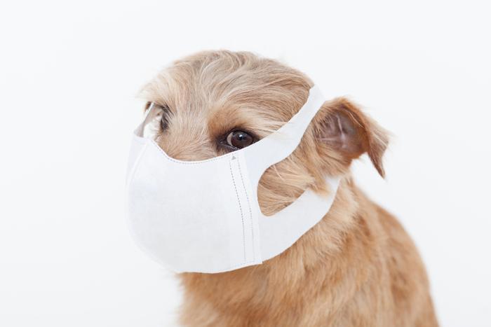 Чумка у собак: симптомы, диагностика и лечение заболевания с полезной диетой