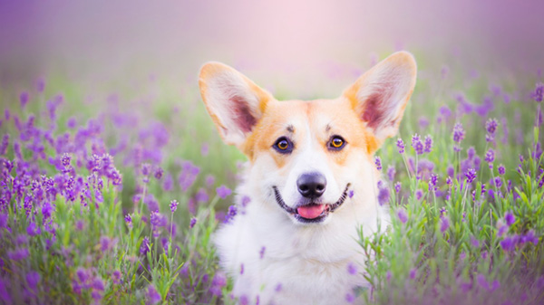 Инструкция по применению препарата Овариовит для собак, показания и дозировка