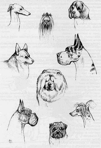 Все о том как узнать породу собаки: по внешнему виду, характеру и фото