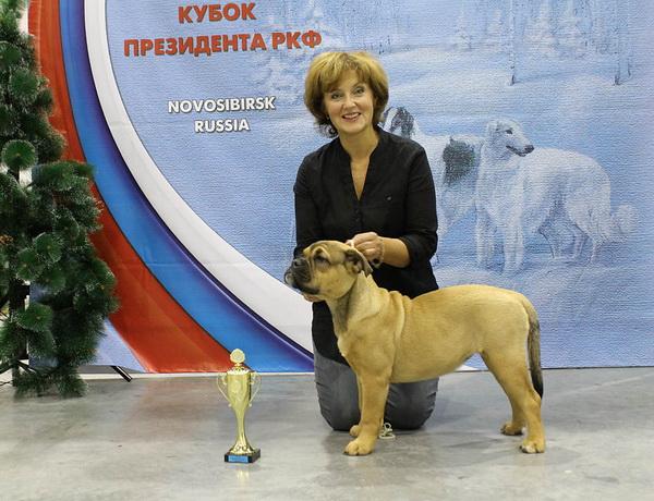 Обзор породы собак Ка де Бо: стандарт, уход, фото питомцев и отзывы владельцев